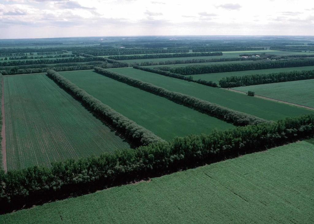 Что значит единое землепользование