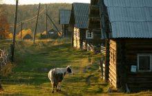 Какую работу выбрать в селе, чтобы предоставили жильё: примеры