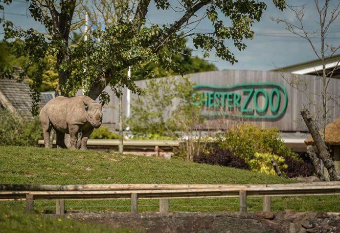 Честерский зоопарк в Чешире