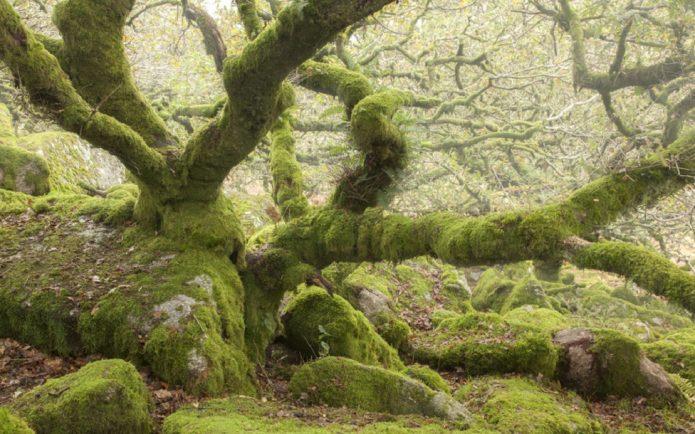 Дартмурский лес в графстве Девоншир